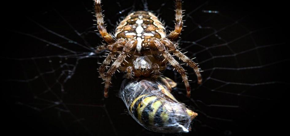 Hypnotherapy Barnes Hypnosis Spider Phobia